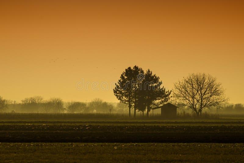 Сиротливые деревья на обрабатываемой земле в панораме сельской местности стоковые изображения