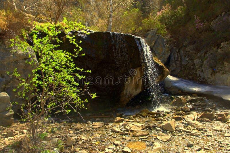 Сиротливые доли куста на водопаде Che-chkysh Altai стоковая фотография rf