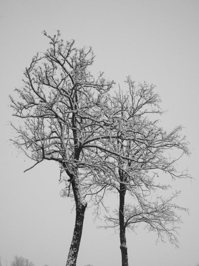Сиротливые замороженные деревья стоковые изображения rf