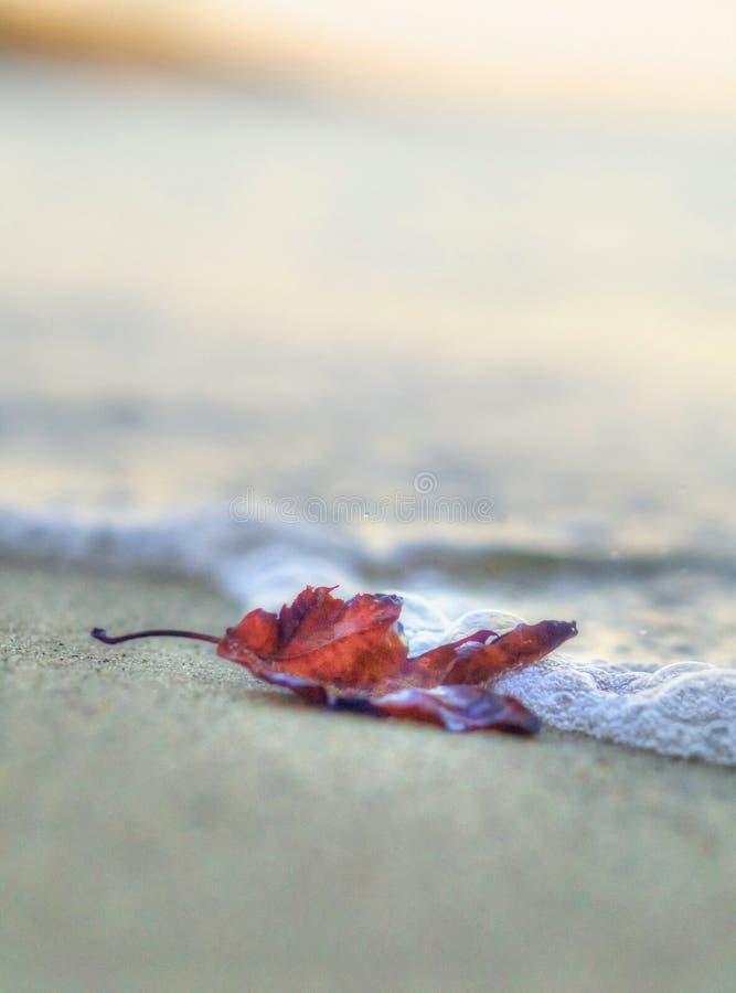 Сиротливые, который палят лист на песке, помытом волной стоковые изображения