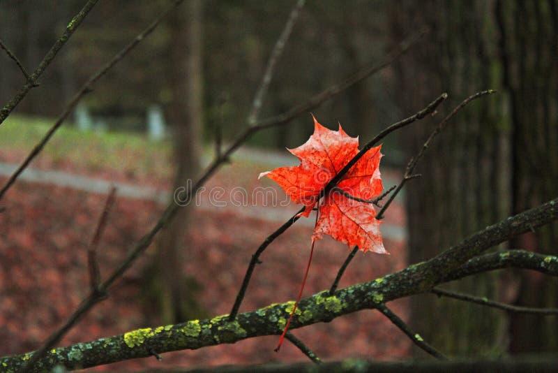 Сиротливые лист на дереве стоковые фото