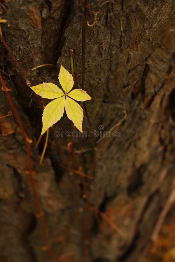 сиротливые пожелтетые лист стоковая фотография