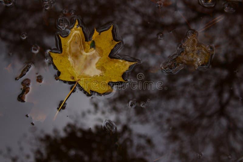 сиротливые пожелтетые лист стоковое изображение