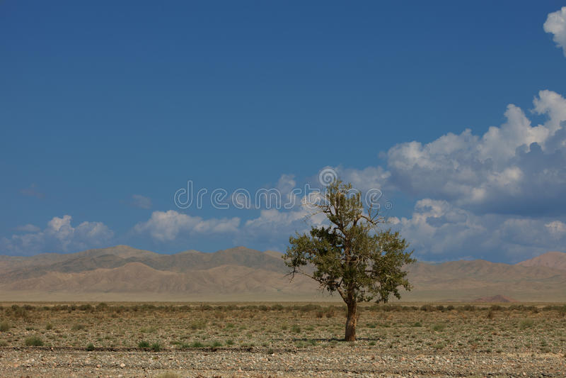 Сиротливый вал в горах стоковое фото