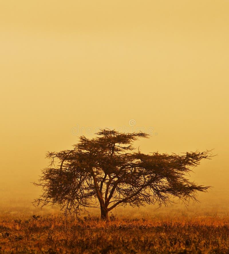 сиротливый вал тумана стоковое фото