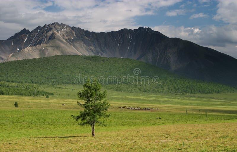 Download сиротливый вал стоковое изображение. изображение насчитывающей highlands - 485267