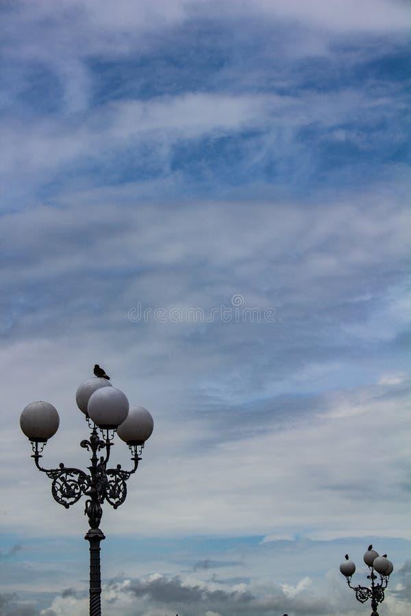 Сиротливый голубь садился на насест на старой лампе с 4 светами Группа в составе голуби в другом свете от позади Большой космос о стоковое фото