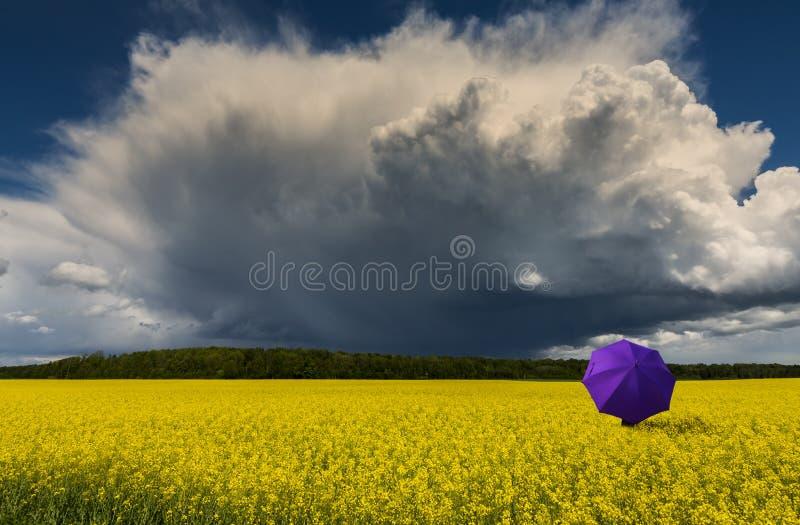 Сиротливый зонтик и причаливая гроза к полю рапса стоковые фото