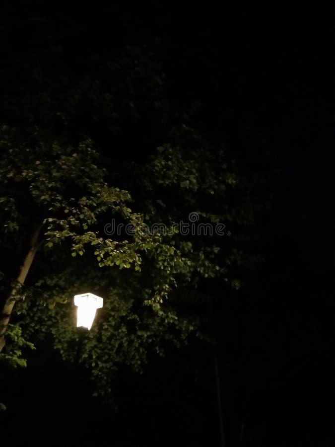 Сиротливый фонарик в ноче стоковые изображения