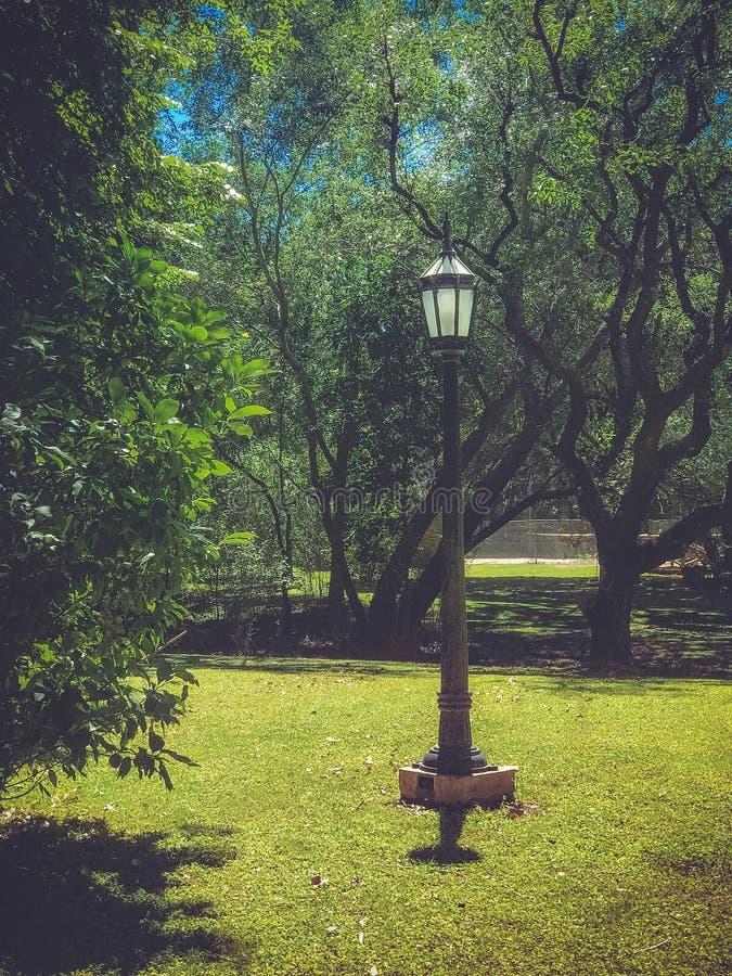 Сиротливый фонарный столб в парке стоковое фото