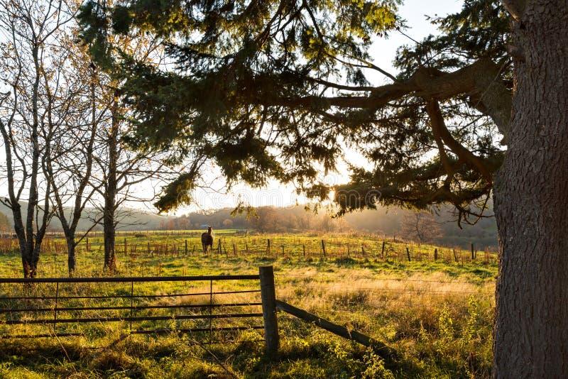 Сиротливая лошадь в луге, на последнем после полудня осени в гористых местностях Шотландии стоковое изображение