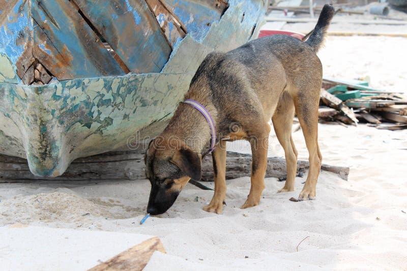 Сиротливая собака стоит стоковое изображение rf