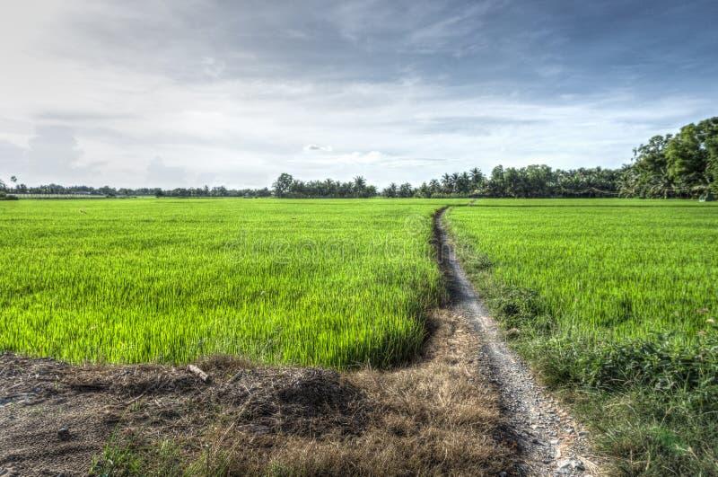 Сиротливая тропа в свежем поле стоковые фото