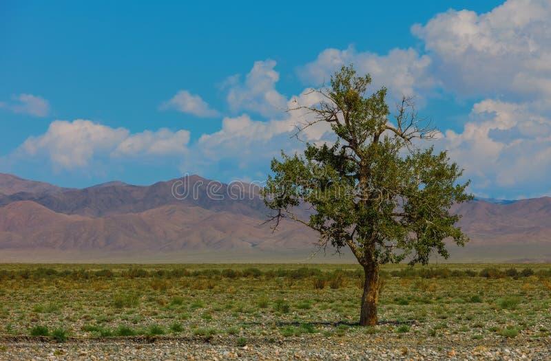 Сиротливое дерево в горах Монголия стоковое изображение