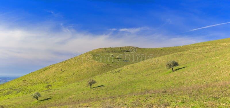 Сиротливое дерево в горах пустословия стоковая фотография