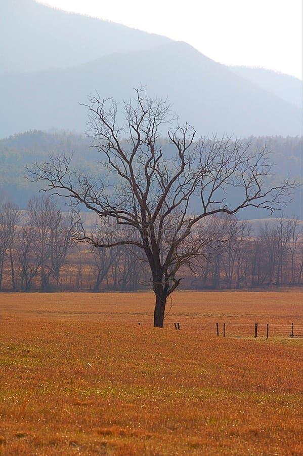 Сиротливое дерево в зиме Теннесси стоковое изображение