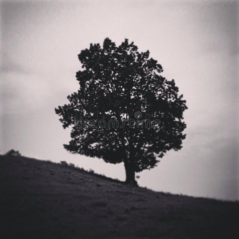 Сиротливое дерево в Теннесси стоковое фото rf
