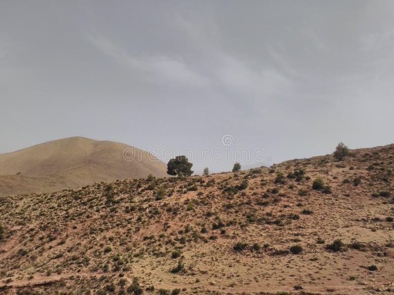 Сиротливое дерево на горе атласа стоковая фотография