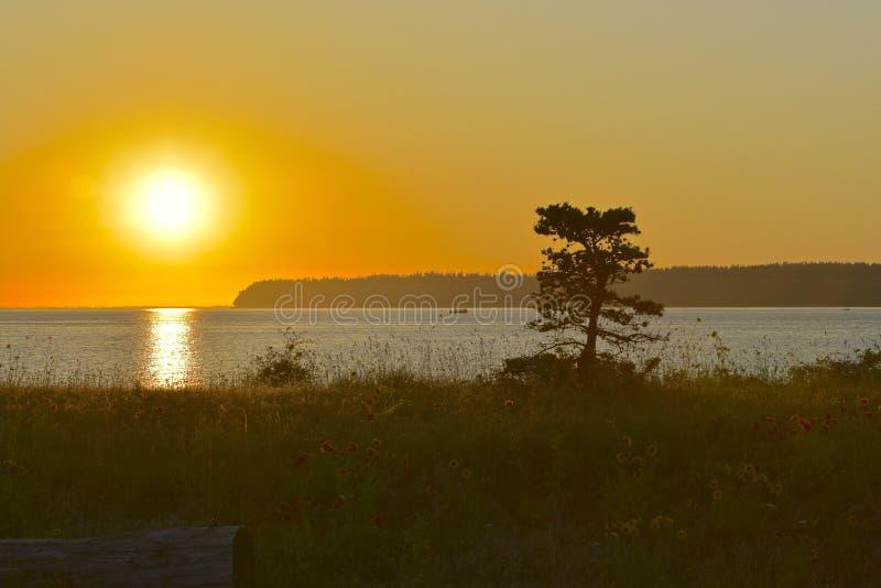 Сиротливое дерево на пляже стоковая фотография rf