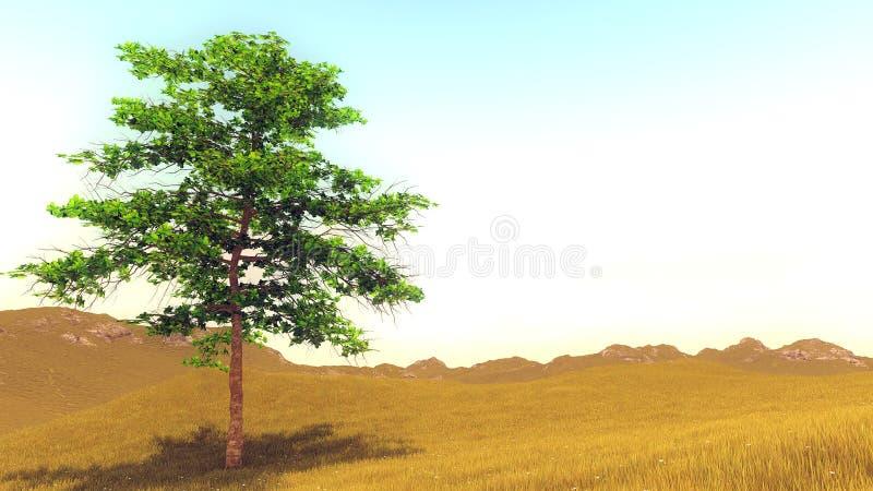 Сиротливое дерево на холме стоковые изображения rf