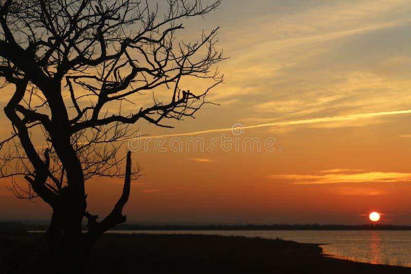 Сиротливое дерево на seashore на заходе солнца, когда солнце на горизонте стоковое фото