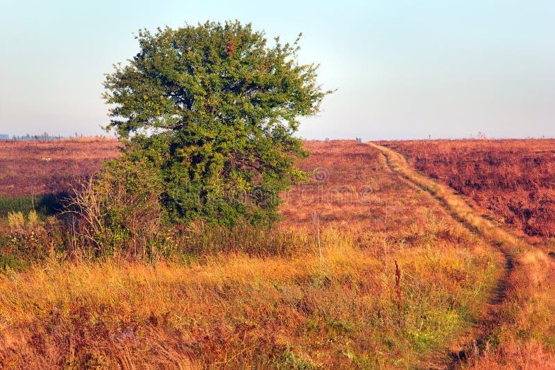 Сиротливое зеленое дерево и травянистая долина с тропой стоковая фотография rf