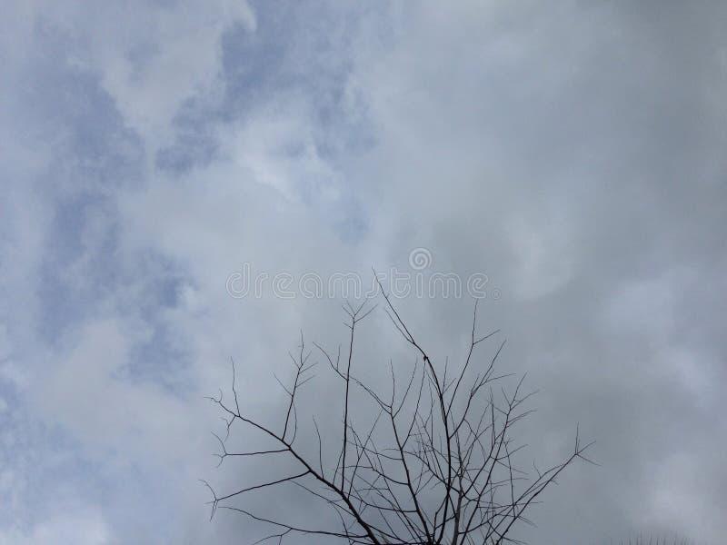 Сиротливое индиго стоковая фотография rf