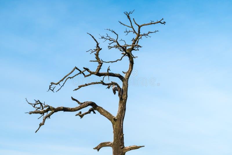 Сиротливое мертвое дерево стоковое фото