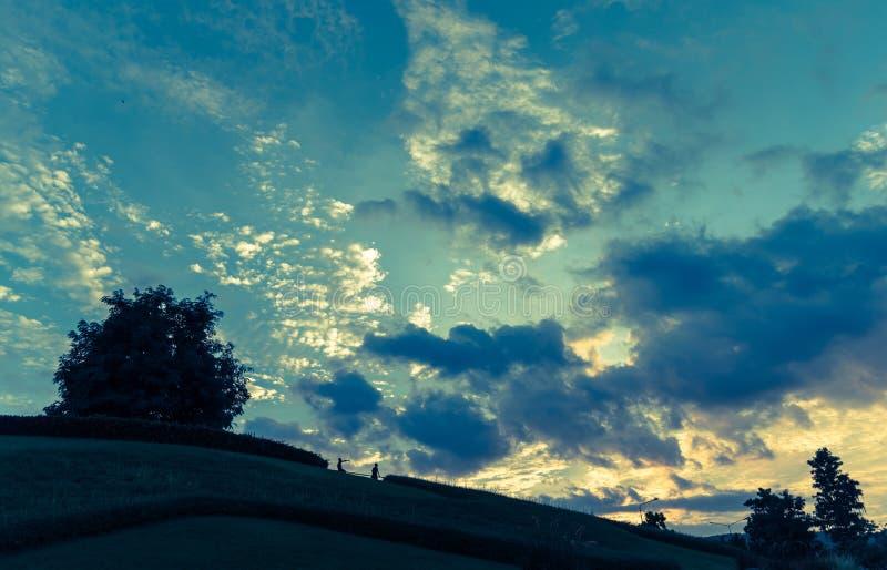 сиротливое небо дерева и захода солнца стоковая фотография rf