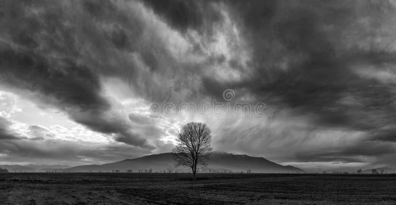 Сиротливое нижнее драматическое небо стоковое фото rf