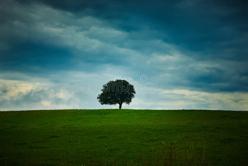Сиротливые дерево и небо стоковое фото