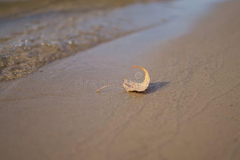 Сиротливые лист тополя на фото †речного берега «мягкое стоковые фотографии rf