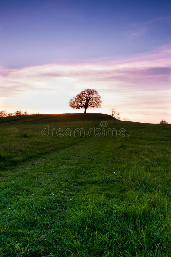 Сиротливые agains дерева заход солнца стоковое фото rf