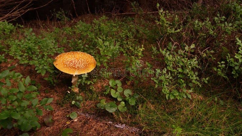 сиротливый гриб стоковое фото