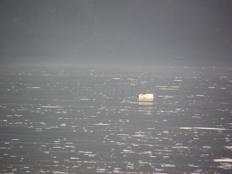 Сиротливый сор стоковое фото