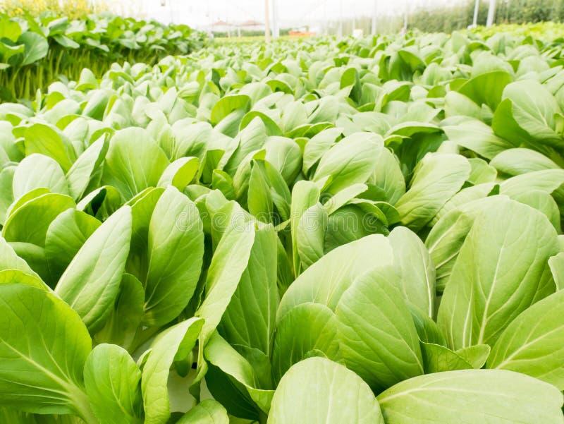 Система гидропоники овощей стоковые фото