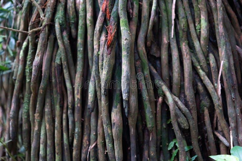 Система корня мангровы воздушная стоковые изображения