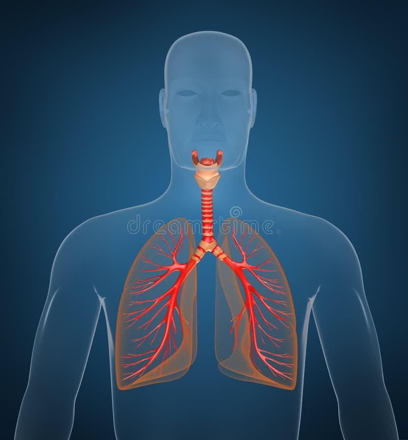 система предпосылки голубая дыхательная иллюстрация штока