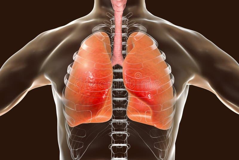 система цифровой людской иллюстрации дыхательная бесплатная иллюстрация