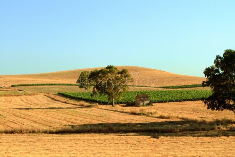 Сицилийский аграрный ландшафт стоковые изображения