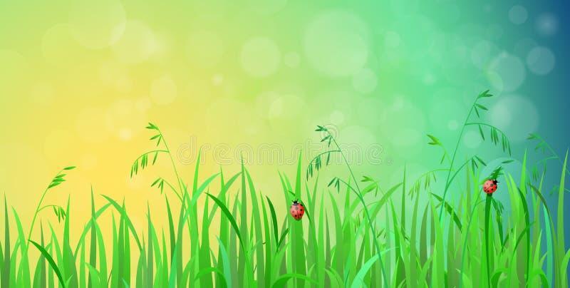 Сияющая лужайка травы с предпосылкой вектора влияния солнечности иллюстрация вектора