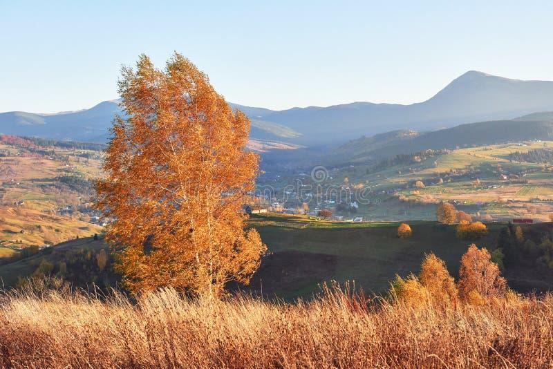 Сияющее дерево бука на наклоне холма с солнечными лучами на долине горы Шикарная сцена утра Красная и желтая осень стоковое фото