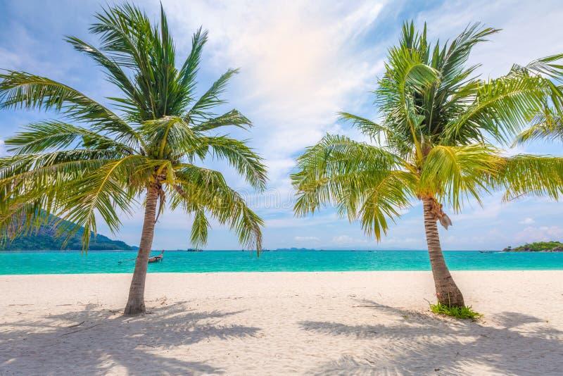 Сияющее солнце и голубое небо на славном пляже с пальмами стоковое фото