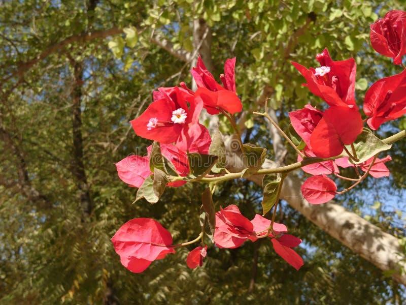 сияющие цветки стоковая фотография