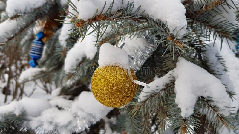 Сияющий золотой блестящий орнамент рождества шарика висит под ветвью ели покрытой с белым снегом Дерево хвои Snowy стоковое фото rf
