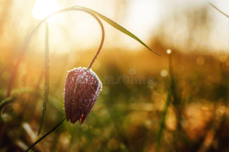 Сила восходящего солнца стоковая фотография