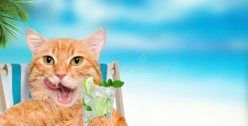 Сидеть кота ослабляя на deckchair стоковая фотография