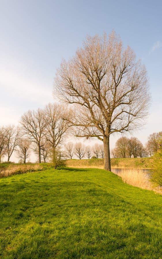 Силуэты дерева в свете раннего утра стоковые изображения