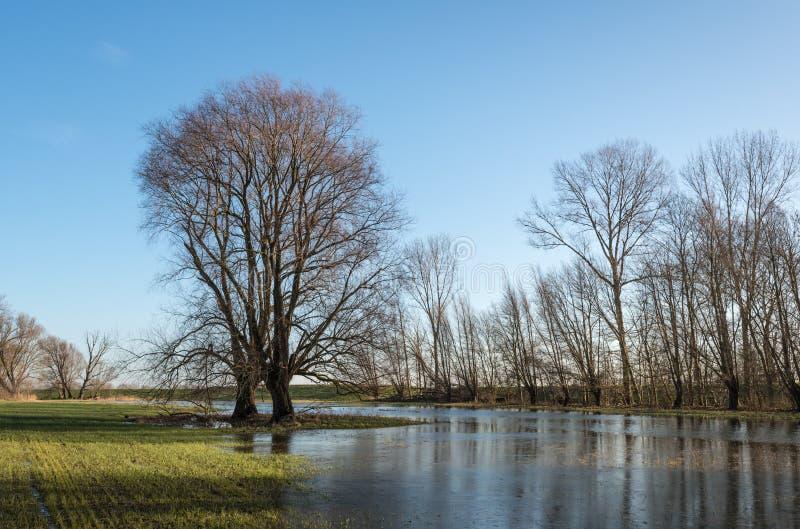 Силуэты дерева и голубое небо стоковые фото