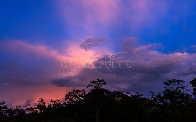 Силуэты леса стоковое изображение rf